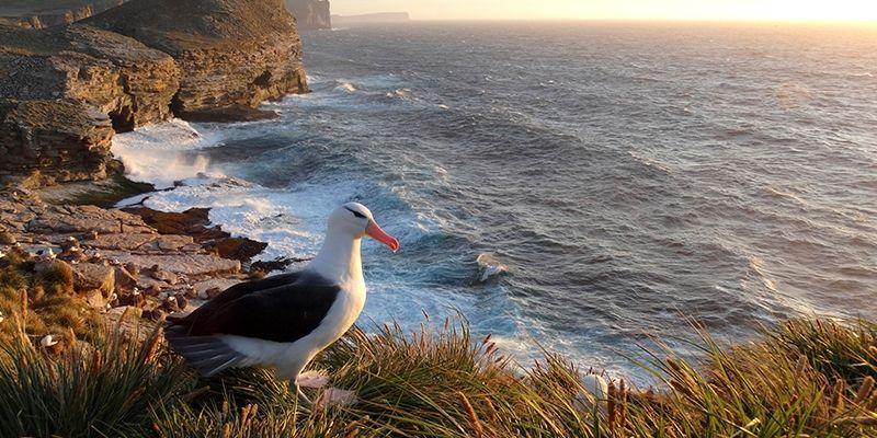 Foto de Albatroz-de-sobrancelha-negra leva prêmio no Reino Unido