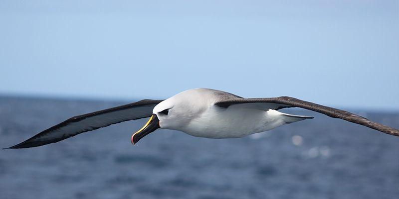 Projeto Albatroz participa da 3ª Conferência Mundial de Aves Marinhas via Twitter