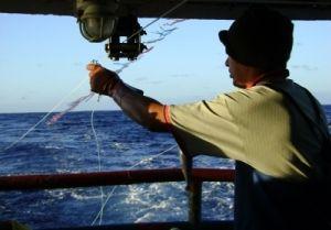 Novas regras são importantes tanto para a conservação de albatrozes e petréis quanto para os pescadores