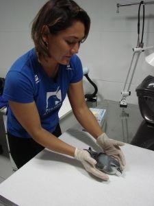Juliana Yuri Saviolli, Coordenadora de Medicina da Conservação do Projeto Albatroz.