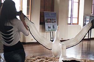 Albatroz no Museu de Pesca0