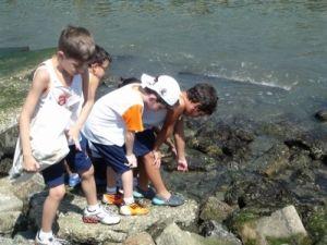 Estudantes coletando espécies marinhas