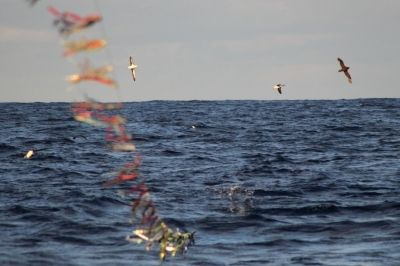 Toriline, equipamento que afugenta as aves marinhas