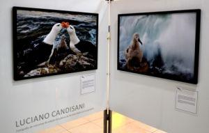 Fotos de Luciano Candisani