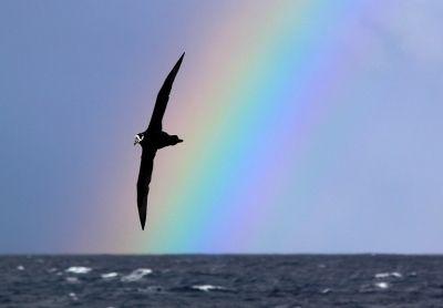 Rainbow (Arco-íris) foto que conquistou 1º lugar em categoria do concurso