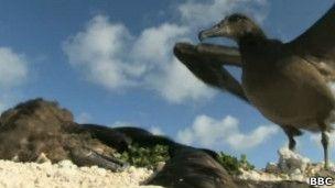 Albatroz em ilha poluída