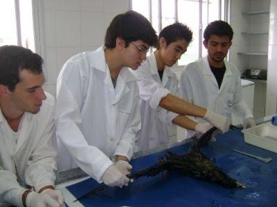 Alunos da UNESP durante ação do Projeto para processamento de Petrel, em 2012