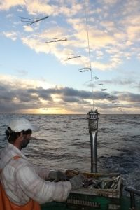 O toriline é uma das medidas permanentes que deve ser utilizada em todas as embarcações de pesca de espinhel. Foto: Dimas Gianuca/ Projeto Albatroz