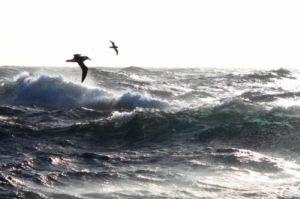 As águas ocêanicas do sul do Brasil são uma área importante de alimentação dos albatrozes