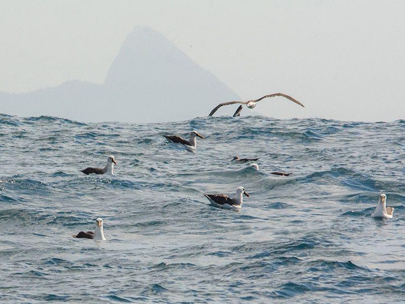 Foto Noti?cias_Mar de albatrozes