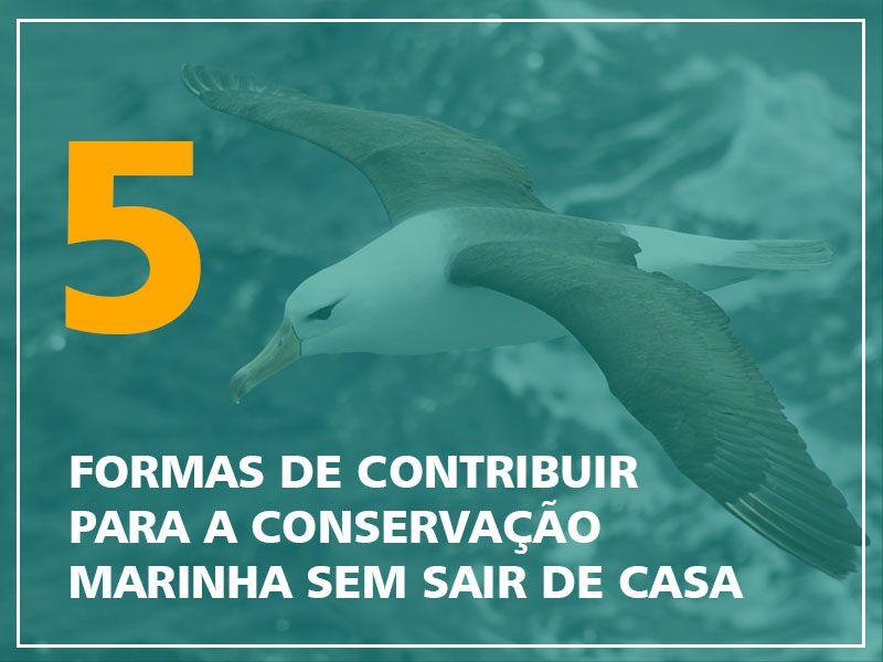 Foto Notícias_5 formas de contribuir