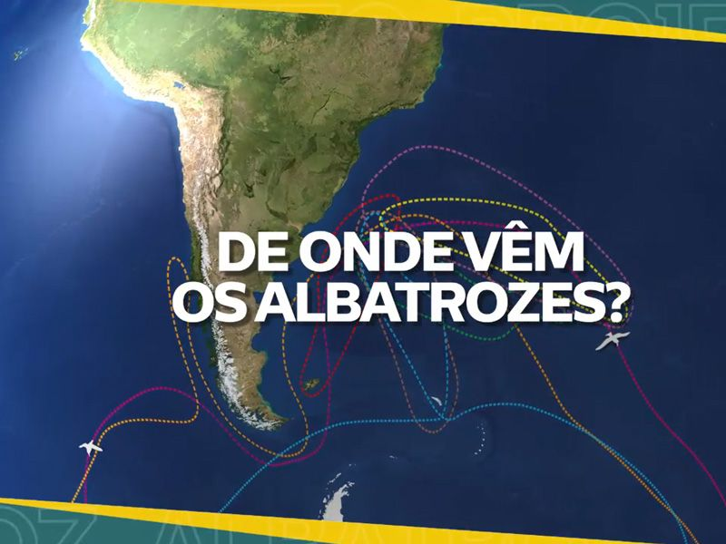 Foto Notícias_Albatroz Responde