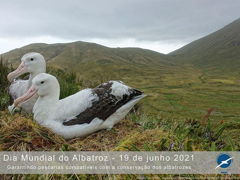 'Garantindo pescarias compatíveis com a conservação dos albatrozes' é o tema do Dia Mundial do Albatroz em 2021