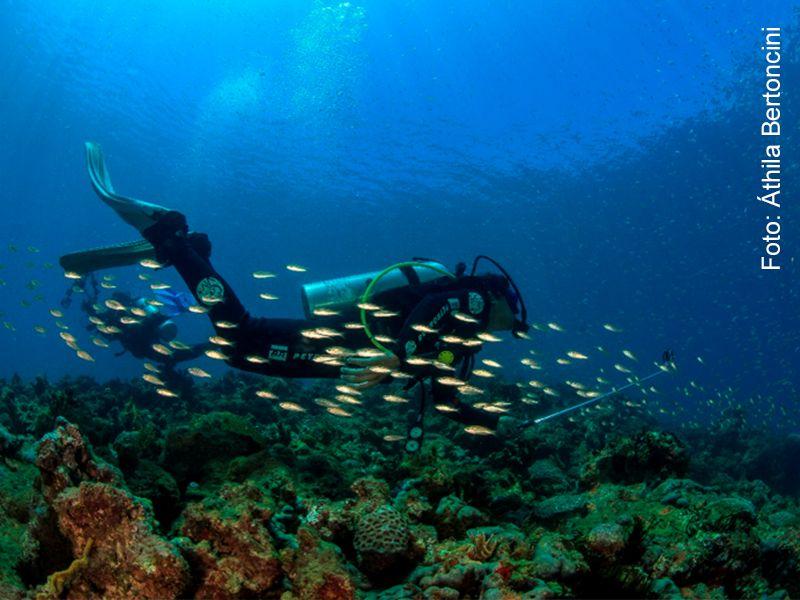 Concurso BIOMAR de FotoSub abre inscrições para selecionar as mais belas imagens do fundo do mar da região de Abrolhos