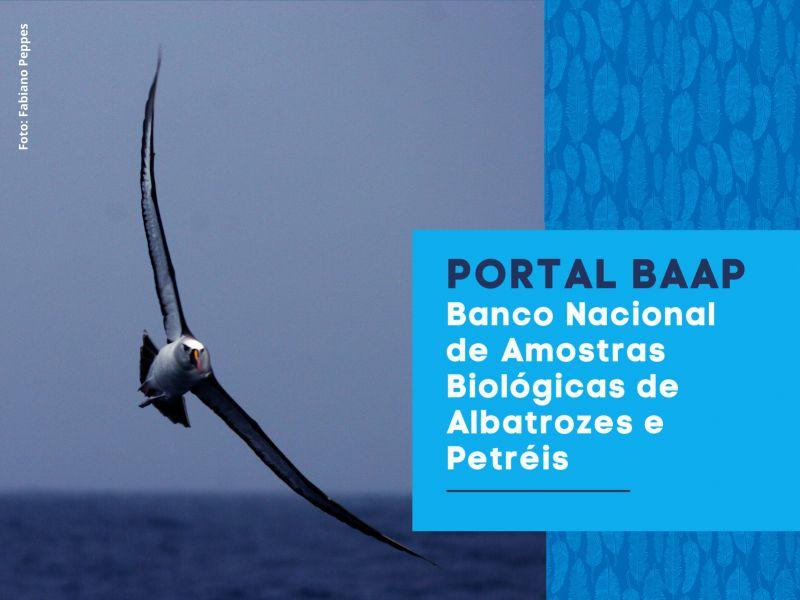 Site facilita acesso de pesquisadores a amostras biológicas de albatrozes e petréis